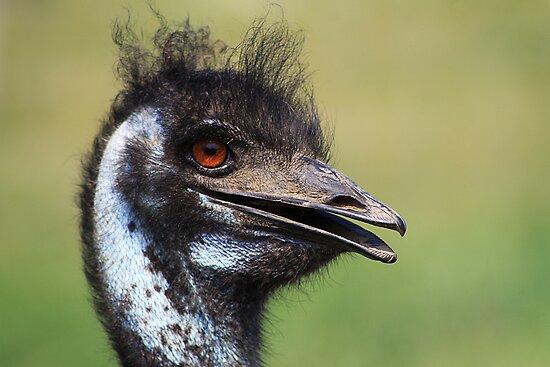 Emu by Alyce Taylor