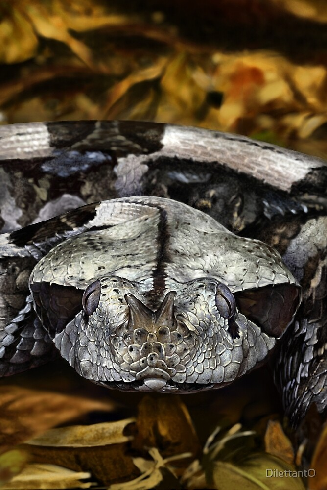 FOREST PUFF ADDER Bitis gabonica DIGITAL PAINTING. NOT A PHOTOGRAPH by DilettantO