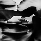 Water Lily by Dragomir Vukovic