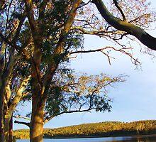 Looking Across Warren Reservoir by margaret walsh