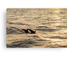 sunset diving Canvas Print