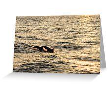 sunset diving Greeting Card