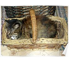 Kitty in the Basket Poster