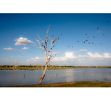 Bee Eaters in Selous Photographic Print