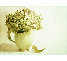 My Little Green Jug Photographic Print
