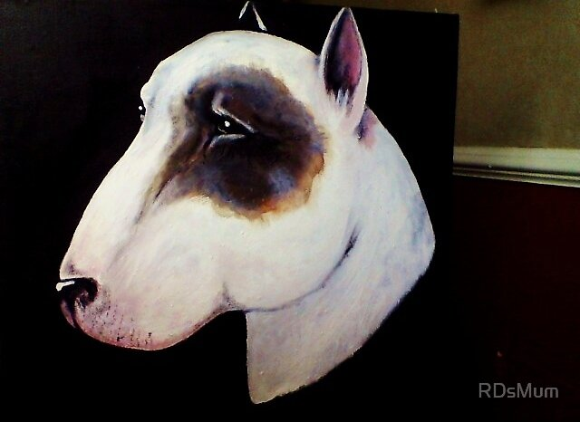 English Bull Terrier- proud old time breed by RDsMum