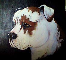 American Bull Terrier  by RDsMum