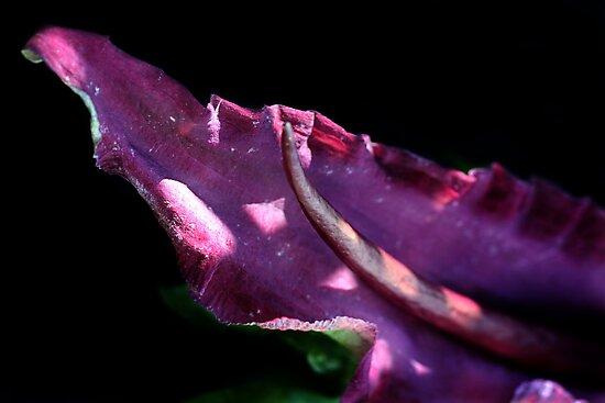 Dragon's Tongue  by Samantha Higgs