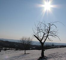 A Frozen Tree in the Rays of the Sun by Dennis Melling
