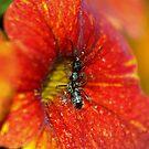 A Wanna Bee......................... by Larry Llewellyn
