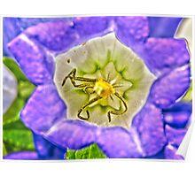 Purple Flower Macro - HDR Poster