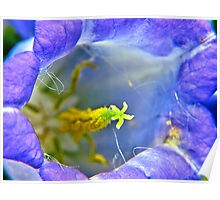 Botanically Explicit - Flower Macro Poster