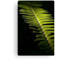 Light in the Forest:  Fern Canvas Print