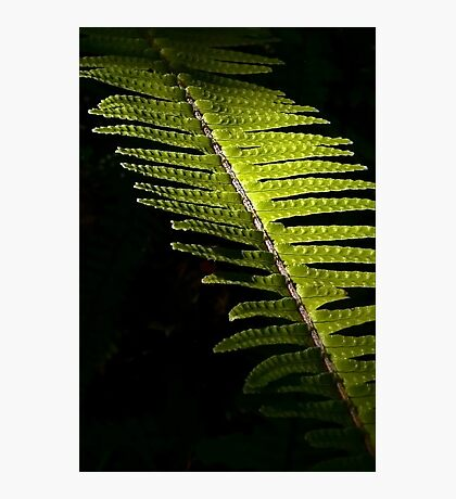 Light in the Forest:  Fern Photographic Print