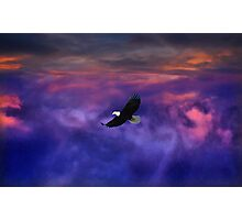 Up where the Eagle flys Photographic Print