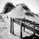 Sand Dune Steps by Mark Curry