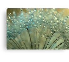Sparkling Dandelion Drops Canvas Print