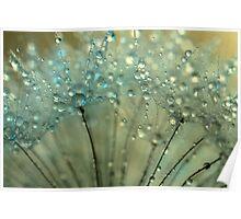 Sparkling Dandelion Drops Poster