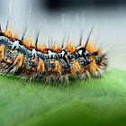 Caterpillar by SKNickel