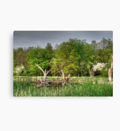 Dead Wood Swamp Before Storm Canvas Print