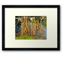 Swamp Grass and Shimmering Lake Framed Print