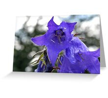 The Colour Purple Greeting Card