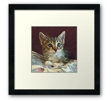 Lil' Taffy Kitten Framed Print