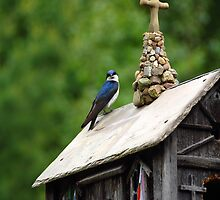 A Bird Church by John Schneider