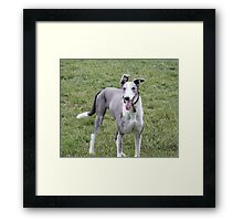 Freddie confused Framed Print