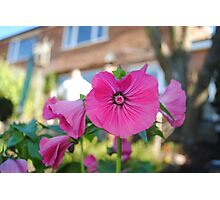 The Trumpet Flower! Photographic Print
