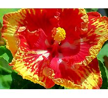 Red And Yellow Hibiscus Photographic Print