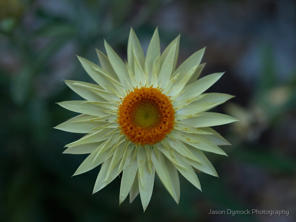Soft Yellow by Jason Dymock Photography