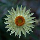 Soft Yellow by Jason Dymock Photography