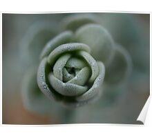 Succulent Rose Poster