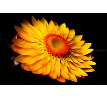 A Yellow Flower Photographic Print