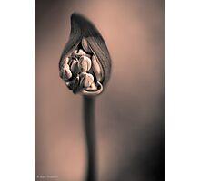 Agapanthus Noir Photographic Print