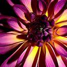 Purple Magic by Jason Dymock Photography