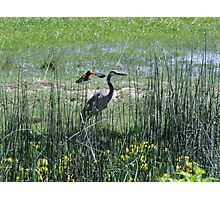 Birds Of A Feather...Payette River Swamps....Idaho Photographic Print