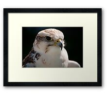 Birds of Prey Series No 9 Framed Print