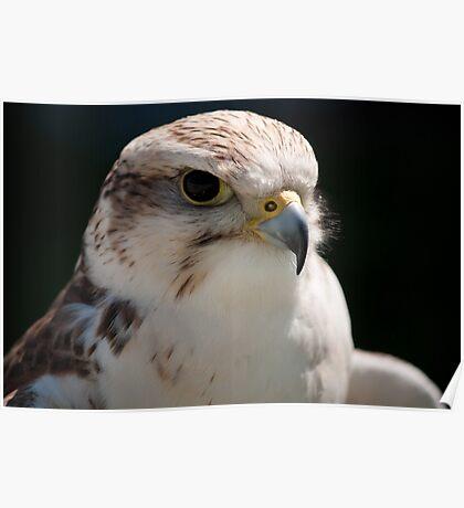 Birds of Prey Series No 9 Poster