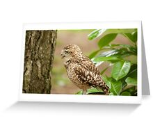 Birds of Prey Series No 10 Greeting Card