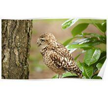 Birds of Prey Series No 10 Poster