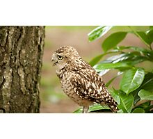 Birds of Prey Series No 10 Photographic Print