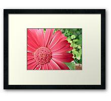 macro pink flower -defocussed green background Framed Print