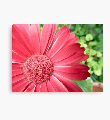macro pink flower -defocussed green background Canvas Print