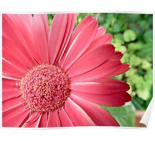 macro pink flower -defocussed green background Poster