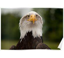 Birds of Prey Series No 11 Poster