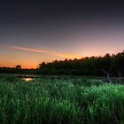 First Ray of Sunlight on Swamp by marshmaven
