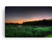 First Ray of Sunlight on Swamp Canvas Print