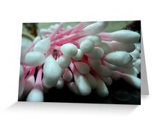 cotton spill Greeting Card